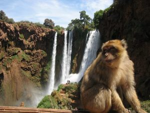 excursion from marrakech , day trip marrakech